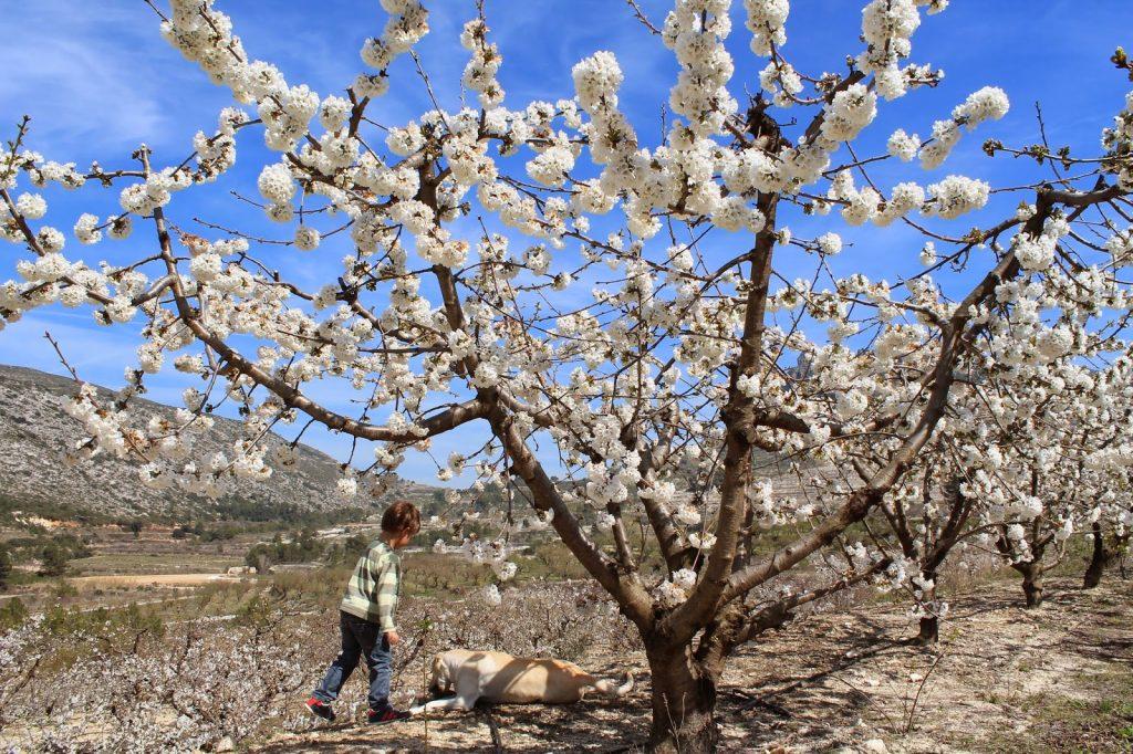 De paseo entre almendros florecidos caferminet.es