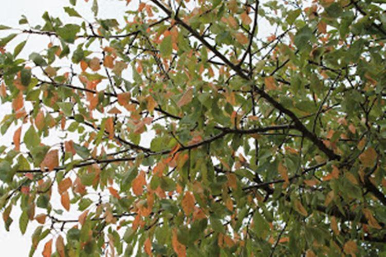 Árbol otoño La Vall de Gallinera Caferminet.es